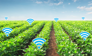 LoRa website smart agriculture teralytic