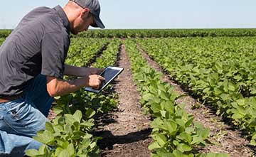 Implementing a LoRa-based precision farming solution comprised of sensors and gateways can help farmers improve crop yields, animal health and farm operations.